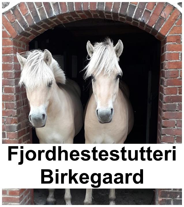 Fjordhestestutteri Birkegaard
