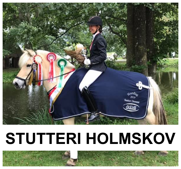 Stutteri Holmskov